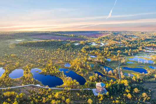 tour agencies in estonia
