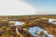 Bog and swamps Estonia Estland Lahemaa hiking